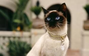 pet collar diamonds gift ideas